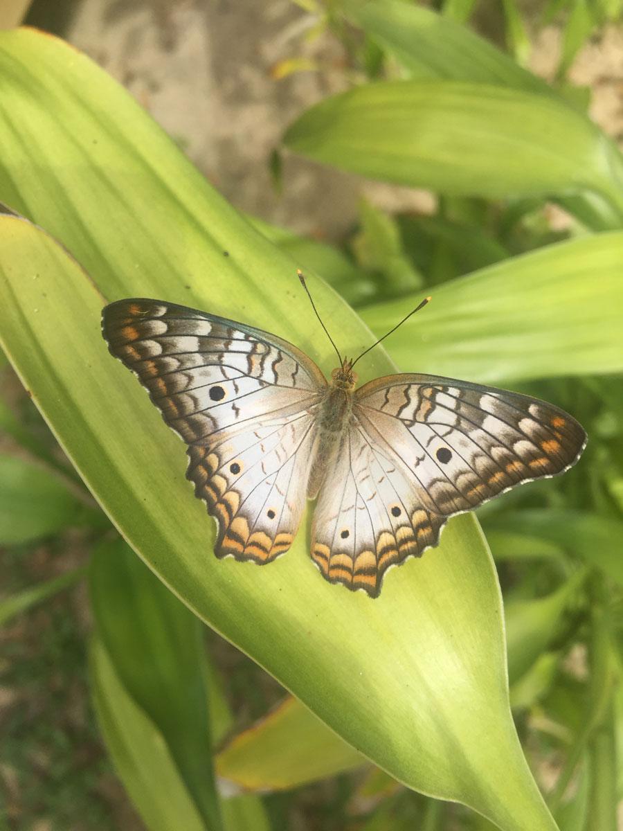 butterfly-sept-16