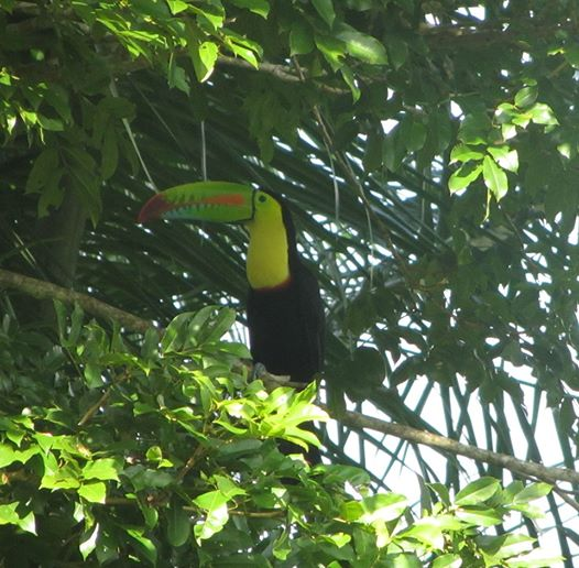 toucan-2-denise-mcdonough