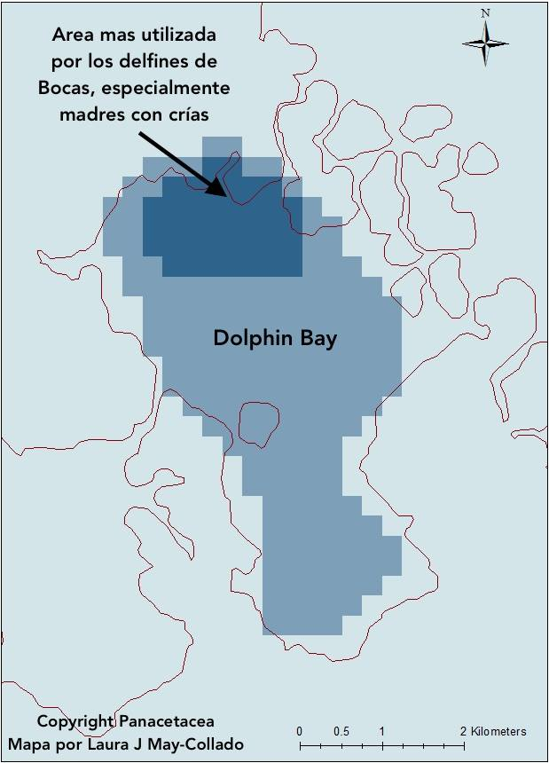 The Bocas Dolphin: Acoustic Alarm in Dolphin Bay - Bocas del