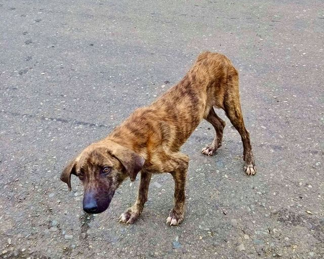 a photo of a hungry street dog in Bocas